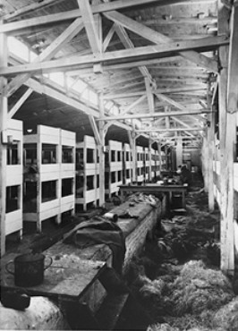 Photographs Of Auschwitz Camp Quot Facilities Quot